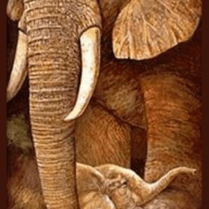 Майка слоница със слонче